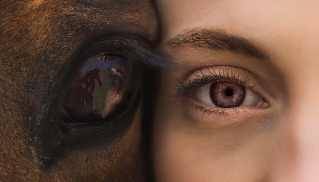 A horse and girl stand side by side, staring into camera